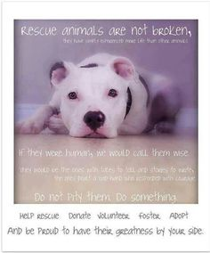 Amen. Proud to be a rescue mom twice over