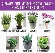 Home Gym – 7 Plants that attract positive energy in your home and office – amzn…. Home Gym – 7 Plants that attract positive energy in your home and office – Meditation Corner, Meditation Rooms, Mindfulness Meditation, Decoration Plante, Zen Room, Inside Plants, Plantation, Houseplants, Container Gardening