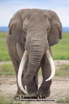 Elephant, African Wildlife, African Big5 Safaris, Lourens Lee