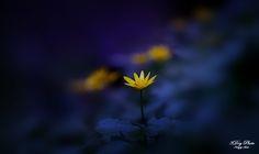 little Flower - null