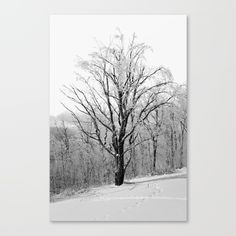 A Maple tree frozen in ice and covered with snow. Photo taken in West Dover, Vermont. Beautiful festive winter scene. Inspired by Ansel Adams. Canvas photography art print. Minimal black and white home decor.