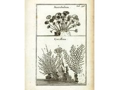"AUTHENTIC FINE COPPER ENGRAVING from the 1700s. Taken from ""Eléments de botanique - Méthode pour comprendre les plantes"",  Joseph Pitton de Tournefort (1656-1708), french b... #lithograph #1700s #antique #science #drawing #coralline"
