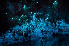 Spectacular Long-Exposure Photographs of a New Zealand Cave Illuminated by Glow Worms.