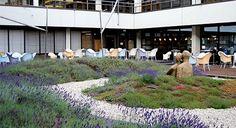 """O sistema """"plantas aromáticas"""" é constituído por plantas tapizantes, ervas aromáticas e pequenas arbustivas como o tomilho, a alfazema e os orégãos."""