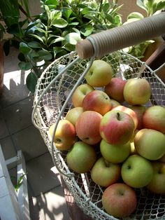 love the basket Houseplants, Apples, Basket, Joy, Fruit, Country, Garden, Photos, Garten