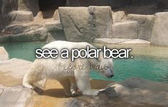 Before I die...(and not at a zoo!)