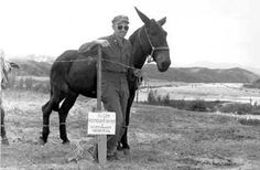 U.S. Mule Preston Brand 08K0. One of the mules captured from Communist forces in Korea was found to have a standard U.S. Army brand (called a Preston Brand), number 08K0. When that brand was located in Army records with the mule's history, it was found that he had been dispatched to the Chine-Burma-India theater during World War II, possibly with the Mars Task Force. At the conclusion of WW II, he was transferred to the Nationalist Chinese Army. The mule must have... Courtesy: olive-drab.com