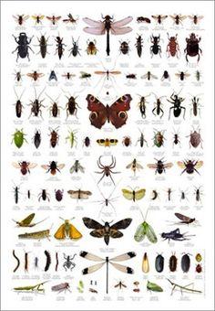 Insekten und Spinnen