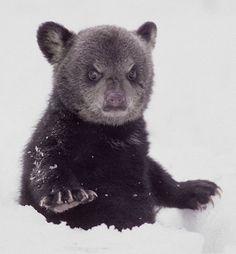 Grumpy Baby Bear