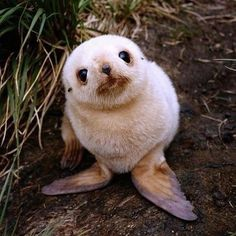 an ADORABLE baby seal.