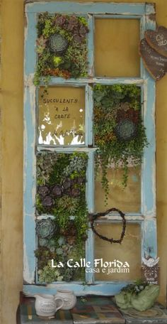 succulent planted vintage window