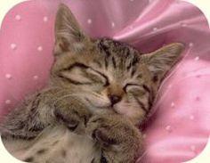 kattenenhonden | punt.nl: Je eigen gratis weblog, gratis fotoalbum, webmail, startpagina enz