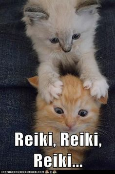 Reiki Kitty! @Ann Sunny goddard  | Come to Fulcher's Therapeutic Massage in Imlay City, MI and Lapeer, MI for all of your massage needs!  Call (810) 724-0996 or (810) 664-8852 respectively for more information or visit our website lapeermassage.com!
