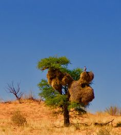 Wheretostay Namibia: Travel Planner & Routes into Namibia Vacation Planner, Travel Planner, Cape Town, Lodges, Dune, Tours, Park, Red, Trip Planner