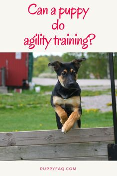 Dog Training Puppy agility training is one of the most common types of training carried out by puppy owners. And most dogs love it! But can your puppy do agility? Agility Training For Dogs, Puppy Training Tips, Training Your Dog, Training Schedule, Training Videos, Dog Minding, Easiest Dogs To Train, Dog Training Techniques, Aggressive Dog