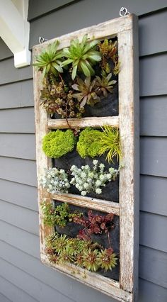 Love the old screen with succulents