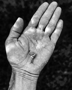 (Průnik - Tomáš Brandejs)  Vrátil jsem se blíž podstatě všech věcí je po dešti dítě tleská na asfaltu šneci  Boží liják přeťal dobu sucha spojil shora dolů svět hmoty a ducha  #nedělníbásnění #poezie #chvilkapoezie #basen #tomasbrandejs #brandejs #prunik #snek #ruka #poetry #poetrycommunityofinstagram #bw #bwphotography #blackandwhite #iphonephotography