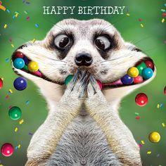 Crazy Silly Happy Birthday Wishes Crazy Silly Happy Birthda.-- Crazy Silly Happy Birthday Wishes Crazy Silly Happy Birthday Wishes Happy Birthday Animals, Happy Birthday Wishes For A Friend, Funny Happy Birthday Wishes, Happy Birthday Pictures, Happy Birthday Greetings, Animal Birthday, Funny Birthday Cards, Birthday Images, 21 Birthday