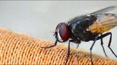 Makkhi - Close to a Fly
