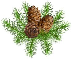 Pine Branch with Cones PNG Clip Art Image | Gallery Yopriceville - High-Quality Images and Transparent PNG Free Clipart