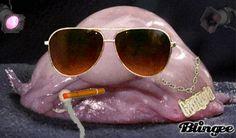 Le blobfish : la super star (moche) du Web - Linternaute