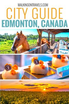 Edmonton Canada: Your guide to things to do in this Alberta capital city in summer and winter that goes beyond the National Parks in the Canadian Rockies. Skip the mall to dive into the downtown food scene, best shops, neighborhoods where you will find mural art and local restaurants serving up big city bites, vintage shops to load up your fall wardrobe and attractions that will keep even your kids happy. #edmontonalberta #canada
