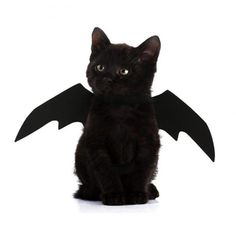 Costume Chien, Bat Costume, Dog Costumes, Costume Parties, Funny Costumes, Costume Ideas, Chat Halloween, Halloween Costumes To Make, Halloween Christmas