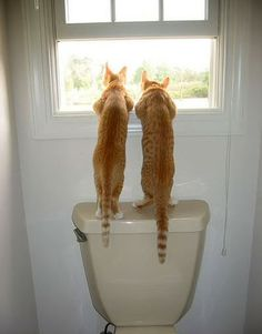 Katten - just looking at the world....lol