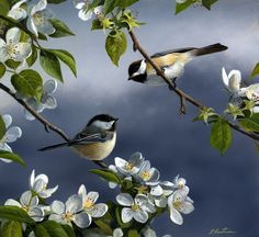 Chickadees And Blossoms by Robert Hautman