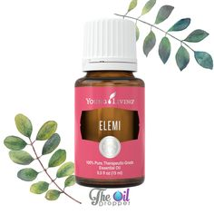 "Elemi essential oil is spicy and grounding and has been used in Europe for centuries in their facial and skin salves. Elemi is a cousin to myrrh and frankincense (Boswellia carterii) and is often referred to as ""the poor man's frankincense"". as it is a bit easier on the pocket. The Egyptians used Elemi for embalming. Today this essential oil is still a terrific choice for skin support at any age.  The fragrant influence is supportive of meditation and grounding. It is very nice to apply…"
