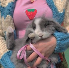 s aesthetic pets animals bunny rabbit fluffy grey sweater white cute Cute Little Animals, Cute Creatures, Beautiful Creatures, Fur Babies, Funny Animals, Kitty, Kawaii, Free Puppies, Funny Puppies