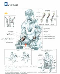 Imgur Post - Imgur Bodybuilding Training, Fitness Bodybuilding, Bodybuilding Motivation, Muscle Fitness, Mens Fitness, Health Fitness, 7 Workout, Gym Workouts, Cardio Gym