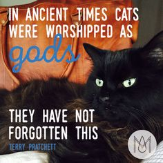 """IN ANCIENT TIME CATS WERE WORSHIPED AS GODS THEY HAVE NOT FORGOTTEN THIS"" by…"