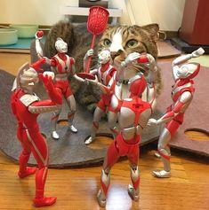 NahoさんはInstagramを利用しています:「こて 「予備Bちゃんが持ちあげて高さを作れば良いニャ。」 ウル 「なるほど!これは楽しいね!(o|o) ジュワ♪」 予備B 「誰も…入れさせない!(o|o) ジュワ!」 こて 「ルール違うけど楽しそうだからオッケーニャ。」 . . #運動会 #玉入れ #ultraact…」 Big Cats, Crazy Cats, Cats And Kittens, Harry Birthday, Figure Photography, Small Cat, Animals And Pets, Kitty, Kawaii