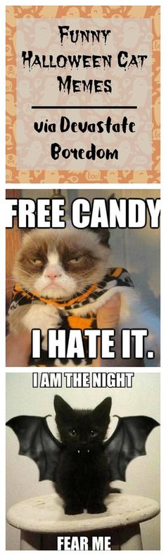 20 Best Funny Halloween Memes Images Happy Halloween Hilarious