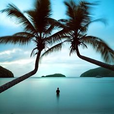 PERFECTION |  Find your happy place @theacquabrand #secluded #tropical #island #palmtrees #beach #holidays  @summersurfing