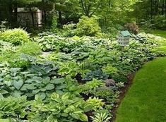Love this hosta garden by Dynwrld