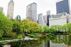The Pond in New York's Central Park in the spring