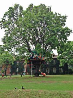 """La """"casita"""" del árbol en el Gimnasio Moderno (Bogotá)."""
