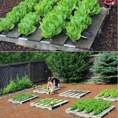 Easy Palet Garden