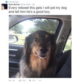 This dog lover who just wants his best friend to know how much the internet loves and appreciates him: