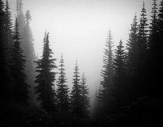 The Truth is out there#forest #loveforest #nature #lovenature #skagen #skag #nord #nordic #skandinavian #skandinavia #pagan #paganism  #fog #naturemagic #witchcraft #witch #asstru #druid #raser #stjernehimmelen #nightforest #darkforest #magic #trolldom #mistic