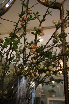 Chaenomeles speciosa,Flowering Quince love this but mabye with dog wood instead
