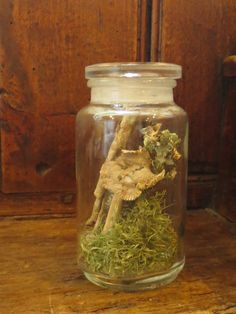 Shop for terrarium on Etsy, the place to express your creativity through the buying and selling of handmade and vintage goods. Classic Quotes, Natural World, Curiosity, Mushroom, Beautiful Things, Tanks, Mason Jars, Kit, Unique Jewelry