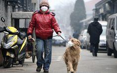 Smog: il veterinario, seri danni anche per animali in città
