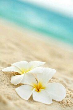 gente se tem uma coisa q eu to apaixonada é com foto de flor!!