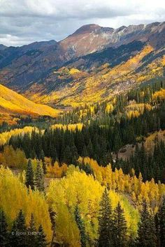 A house in Ouray :: Western History Beautiful World, Beautiful Places, Beautiful Pictures, Trees Beautiful, Autumn Scenes, Aspen Trees, Photos Voyages, Rocky Mountains, Colorado Mountains