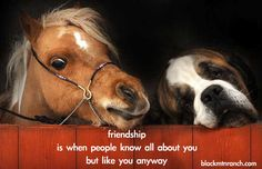 Friendship is when people know all about you but like you anyway.  http://blackmtnranch.com