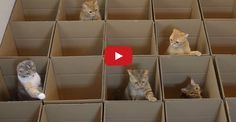 9 Cats and Their Love of Boxes – Oh What Fun !!