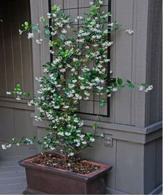 fine 12 Best Climbing Flowers for Pergolas and Trellises https://matchness.com/2018/04/13/12-best-climbing-flowers-for-pergolas-and-trellises/